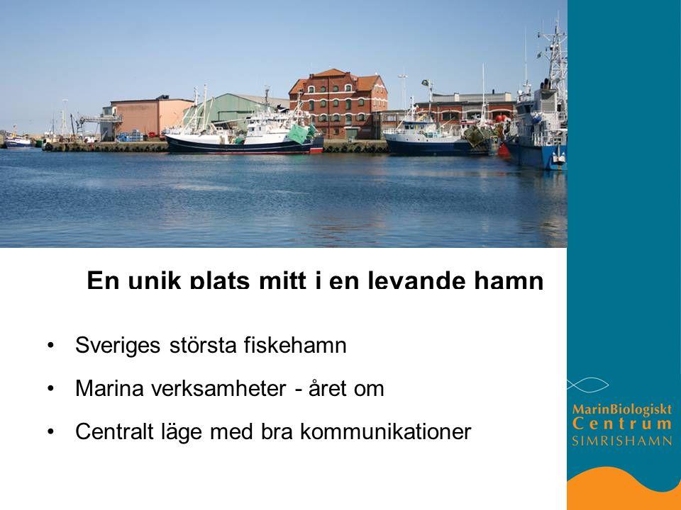 En unik plats mitt i en levande hamn Sveriges största fiskehamn Marina verksamheter - året om Centralt läge med bra kommunikationer