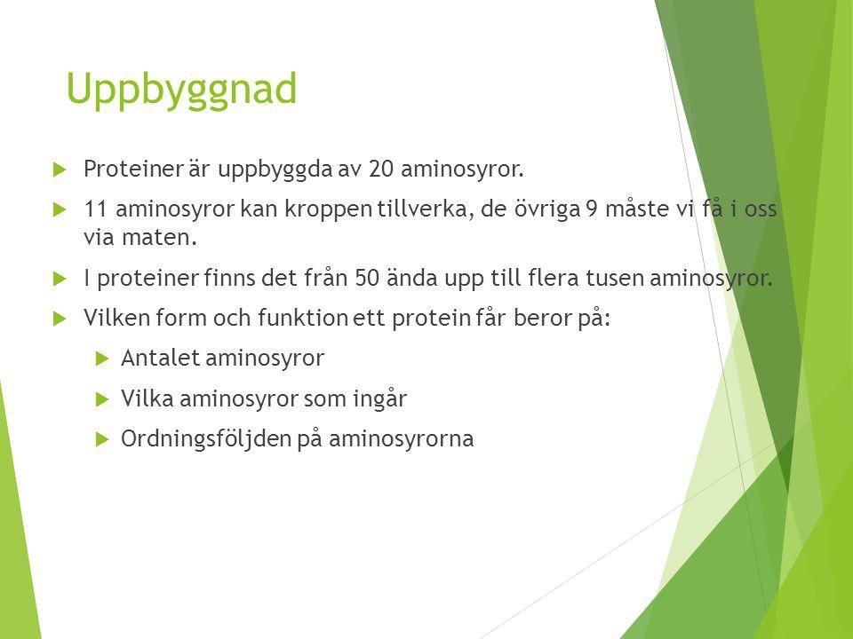 Uppbyggnad  Proteiner är uppbyggda av 20 aminosyror.  11 aminosyror kan kroppen tillverka, de övriga 9 måste vi få i oss via maten.  I proteiner fi