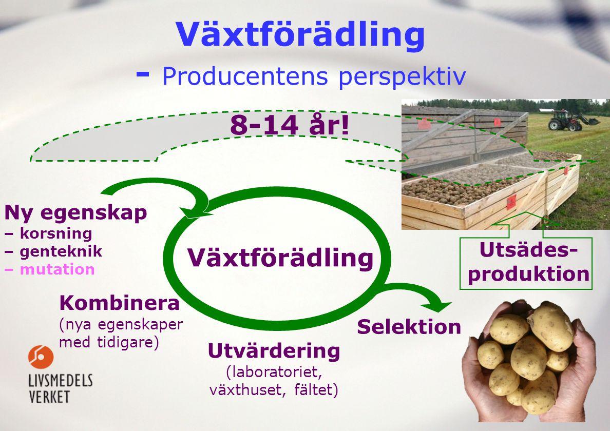 Utsädes- produktion Växtförädling - Producentens perspektiv Kombinera (nya egenskaper med tidigare) Växtförädling Selektion Utvärdering (laboratoriet,