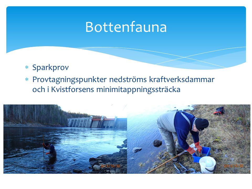  Sparkprov  Provtagningspunkter nedströms kraftverksdammar och i Kvistforsens minimitappningssträcka Bottenfauna