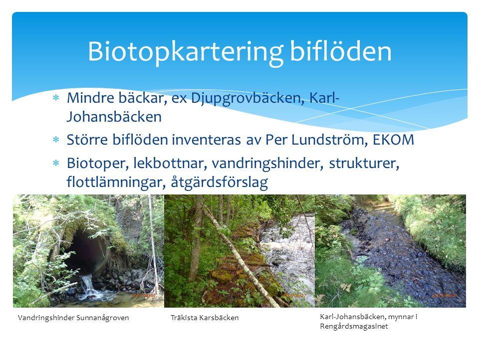  Mindre bäckar, ex Djupgrovbäcken, Karl- Johansbäcken  Större biflöden inventeras av Per Lundström, EKOM  Biotoper, lekbottnar, vandringshinder, st