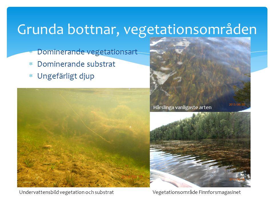  Dominerande vegetationsart  Dominerande substrat  Ungefärligt djup Grunda bottnar, vegetationsområden Hårslinga vanligaste arten Undervattensbild