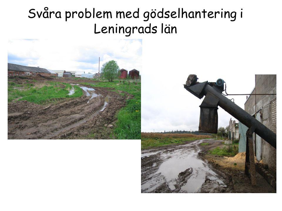 Svåra problem med gödselhantering i Leningrads län