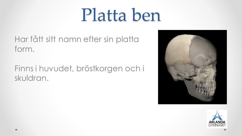 Platta ben Har fått sitt namn efter sin platta form. Finns i huvudet, bröstkorgen och i skuldran.