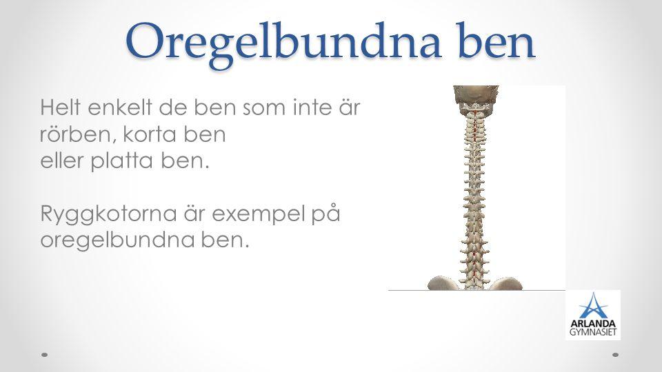 Oregelbundna ben Helt enkelt de ben som inte är rörben, korta ben eller platta ben. Ryggkotorna är exempel på oregelbundna ben.
