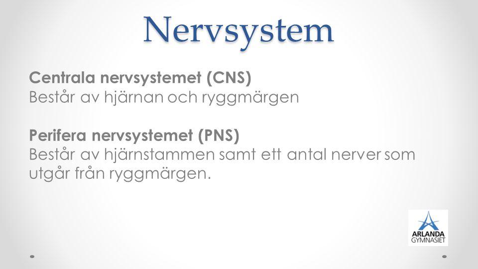 Nervsystem Centrala nervsystemet (CNS) Består av hjärnan och ryggmärgen Perifera nervsystemet (PNS) Består av hjärnstammen samt ett antal nerver som u
