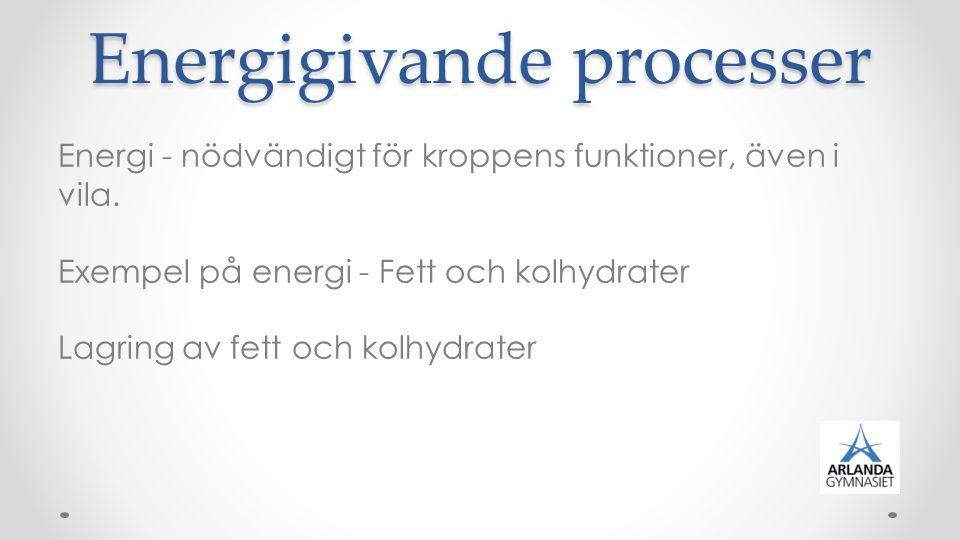 Energigivande processer Energi - nödvändigt för kroppens funktioner, även i vila. Exempel på energi - Fett och kolhydrater Lagring av fett och kolhydr