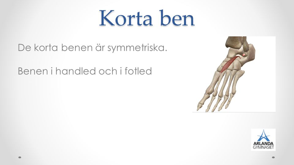 Korta ben De korta benen är symmetriska. Benen i handled och i fotled