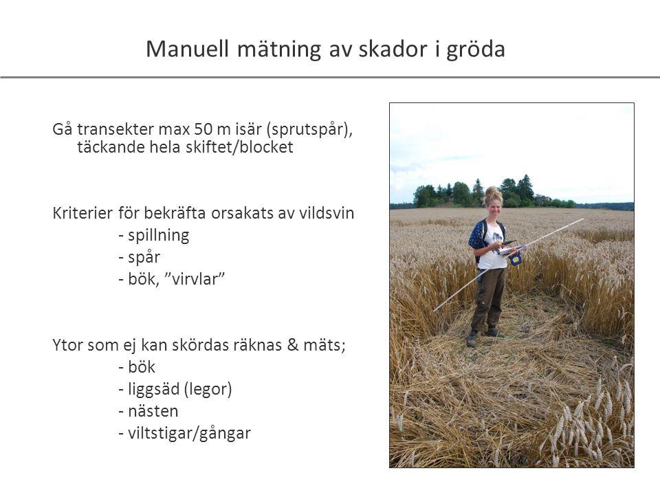 Manuell mätning av skador i gröda Gå transekter max 50 m isär (sprutspår), täckande hela skiftet/blocket Kriterier för bekräfta orsakats av vildsvin -