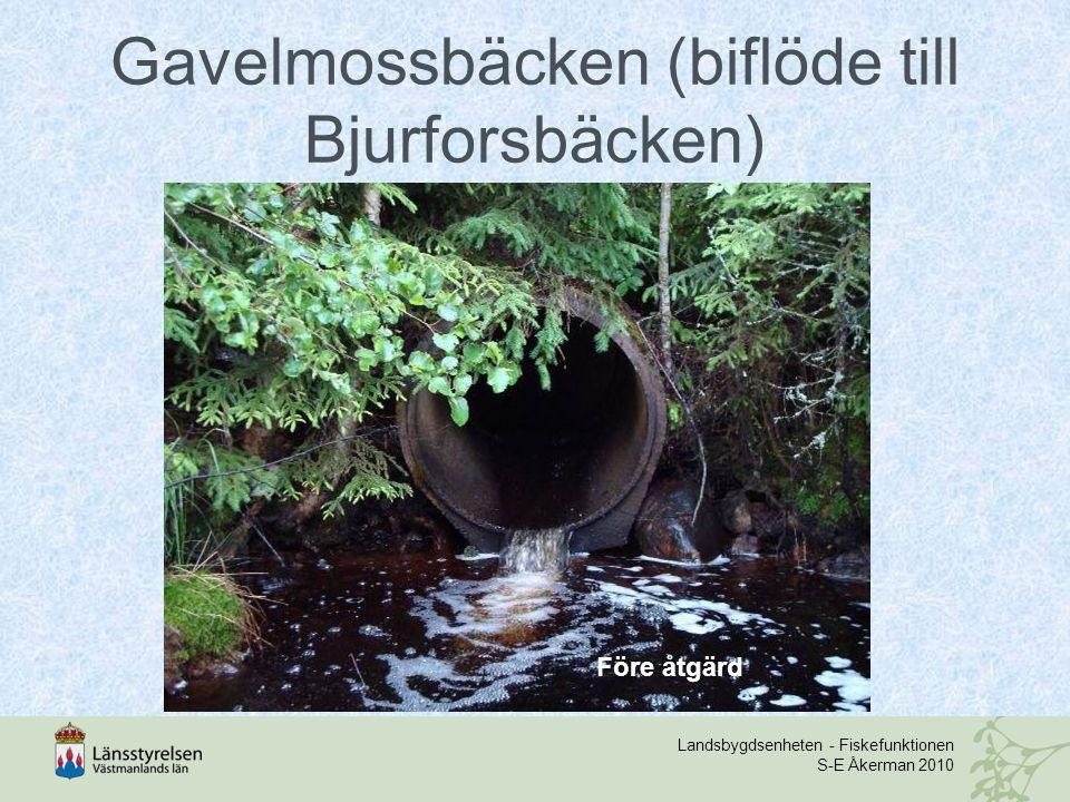 Landsbygdsenheten - Fiskefunktionen S-E Åkerman 2010 Gavelmossbäcken (biflöde till Bjurforsbäcken) Före åtgärd