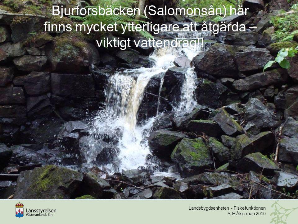 Landsbygdsenheten - Fiskefunktionen S-E Åkerman 2010 Bjurforsbäcken (Salomonsån) här finns mycket ytterligare att åtgärda – viktigt vattendrag!!
