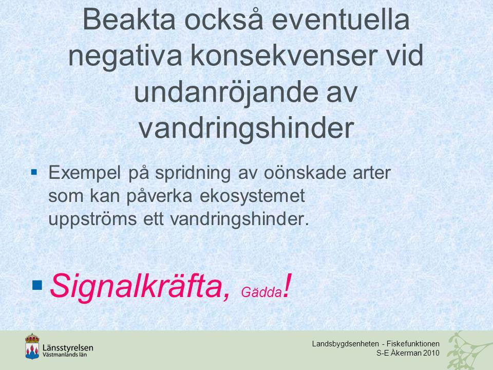 Landsbygdsenheten - Fiskefunktionen S-E Åkerman 2010 Beakta också eventuella negativa konsekvenser vid undanröjande av vandringshinder  Exempel på spridning av oönskade arter som kan påverka ekosystemet uppströms ett vandringshinder.