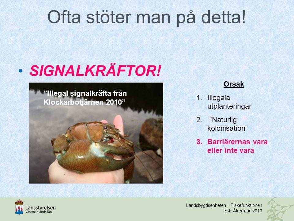"""Landsbygdsenheten - Fiskefunktionen S-E Åkerman 2010 Ofta stöter man på detta! SIGNALKRÄFTOR! """"Illegal signalkräfta från Klockarbotjärnen 2010"""" Orsak"""