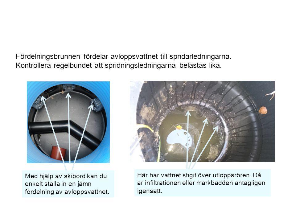Fördelningsbrunnen fördelar avloppsvattnet till spridarledningarna. Kontrollera regelbundet att spridningsledningarna belastas lika. Här har vattnet s