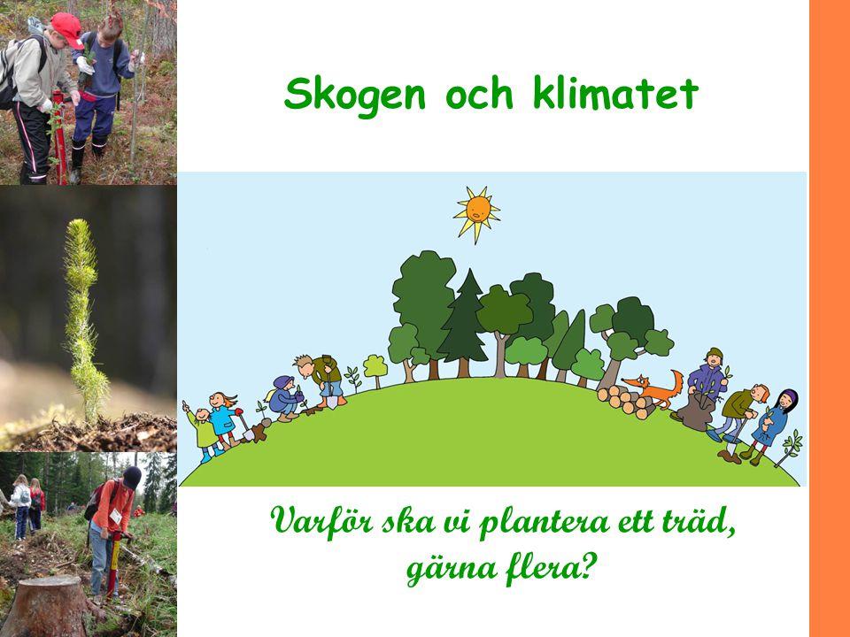 Skogen och klimatet Varför ska vi plantera ett träd, gärna flera?