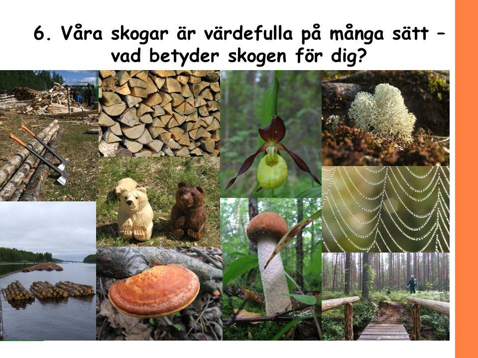 10/(12) 6. Våra skogar är värdefulla på många sätt – vad betyder skogen för dig?