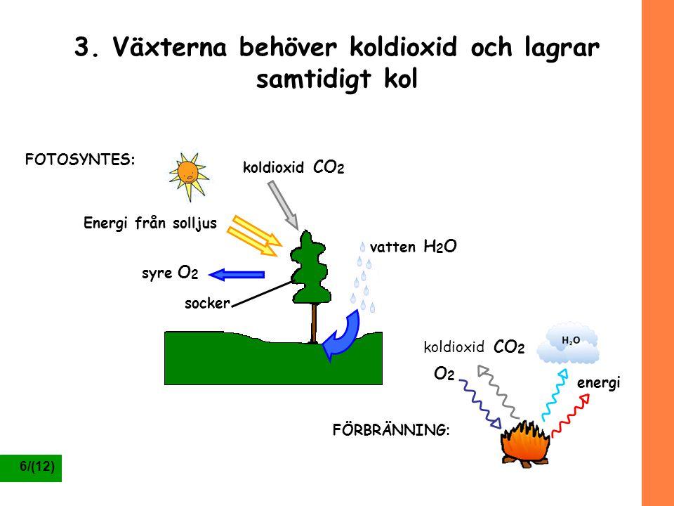6/(12) 3. Växterna behöver koldioxid och lagrar samtidigt kol Energi från solljus koldioxid CO 2 vatten H 2 O syre O 2 socker O2O2 koldioxid CO 2 ener