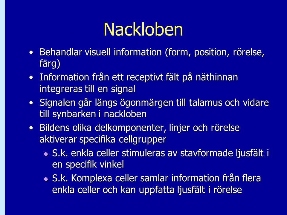 Nackloben Behandlar visuell information (form, position, rörelse, färg)Behandlar visuell information (form, position, rörelse, färg) Information från