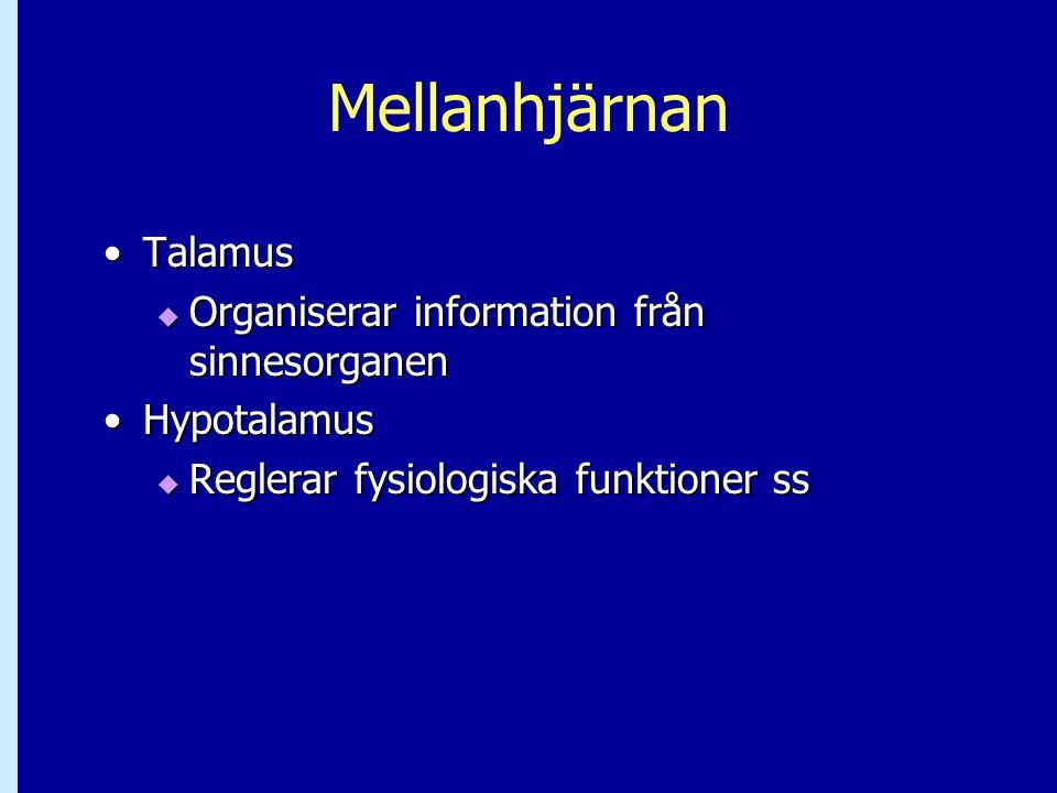 Mellanhjärnan TalamusTalamus  Organiserar information från sinnesorganen HypotalamusHypotalamus  Reglerar fysiologiska funktioner ss
