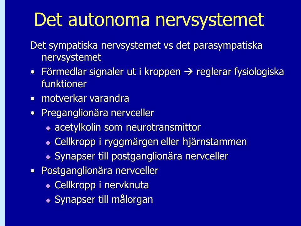 Det autonoma nervsystemet Det sympatiska nervsystemet vs det parasympatiska nervsystemet Förmedlar signaler ut i kroppen  reglerar fysiologiska funkt
