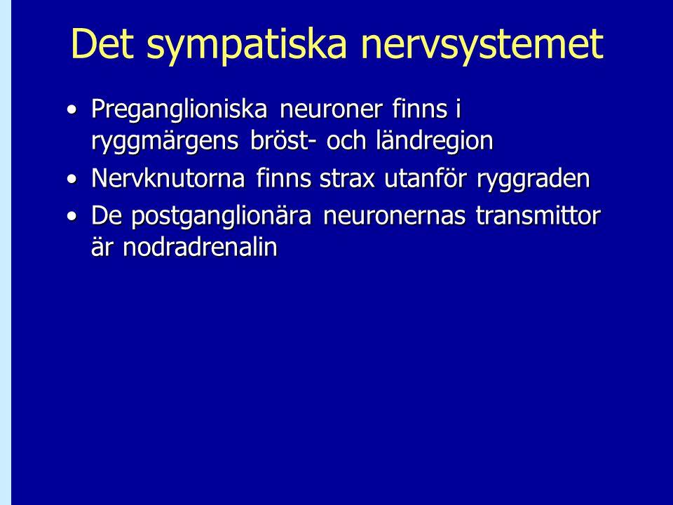 Det sympatiska nervsystemet Preganglioniska neuroner finns i ryggmärgens bröst- och ländregionPreganglioniska neuroner finns i ryggmärgens bröst- och