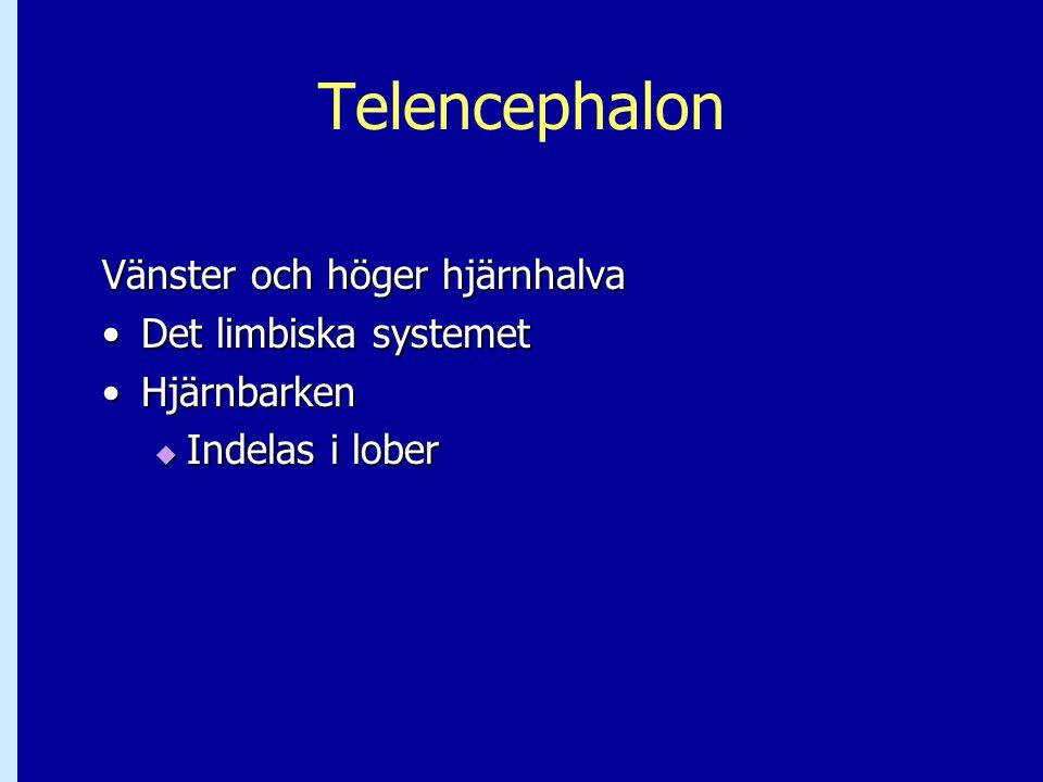 Telencephalon Vänster och höger hjärnhalva Det limbiska systemetDet limbiska systemet HjärnbarkenHjärnbarken  Indelas i lober
