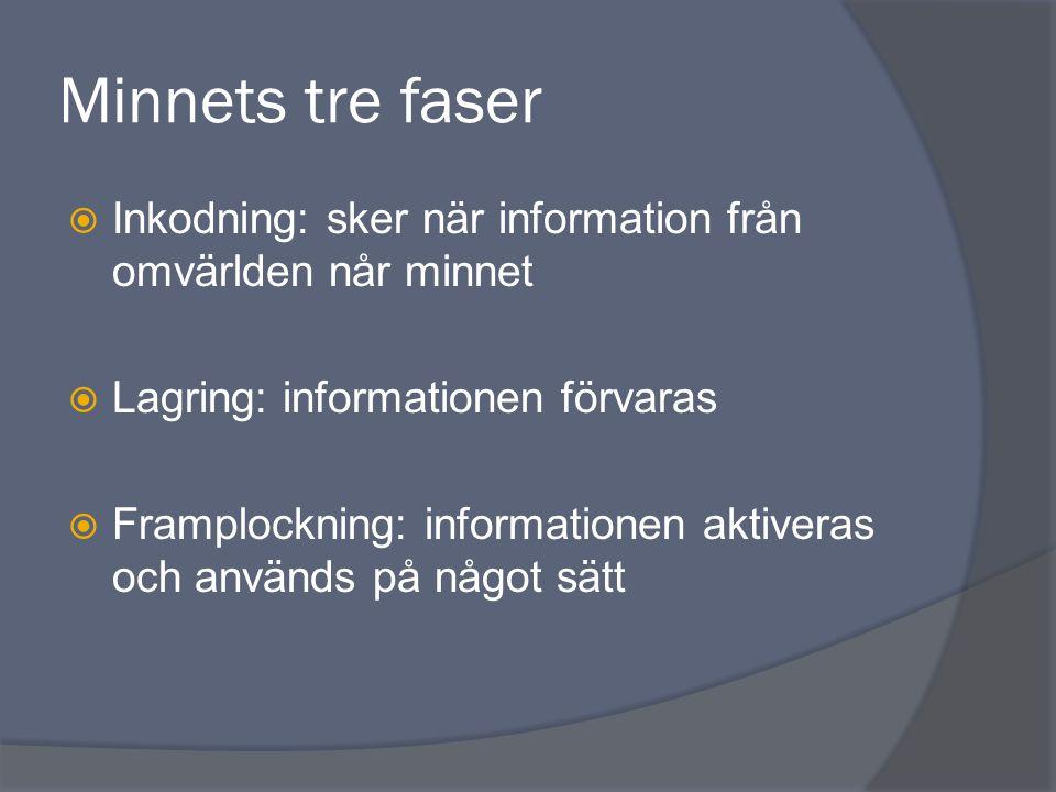 Minnets tre faser  Inkodning: sker när information från omvärlden når minnet  Lagring: informationen förvaras  Framplockning: informationen aktiver