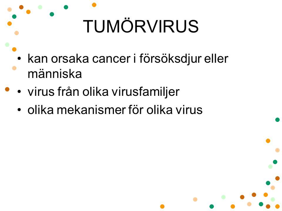 TUMÖRVIRUS kan orsaka cancer i försöksdjur eller människa virus från olika virusfamiljer olika mekanismer för olika virus