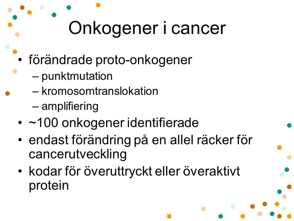 Onkogener i cancer förändrade proto-onkogener –punktmutation –kromosomtranslokation –amplifiering ~100 onkogener identifierade endast förändring på en