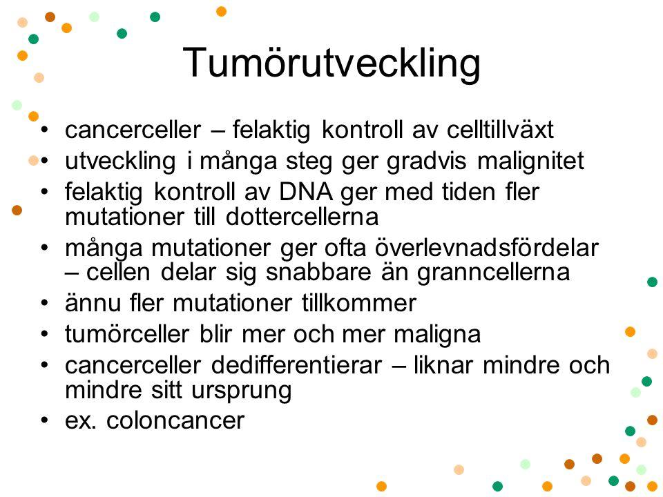 Tumörutveckling cancerceller – felaktig kontroll av celltillväxt utveckling i många steg ger gradvis malignitet felaktig kontroll av DNA ger med tiden