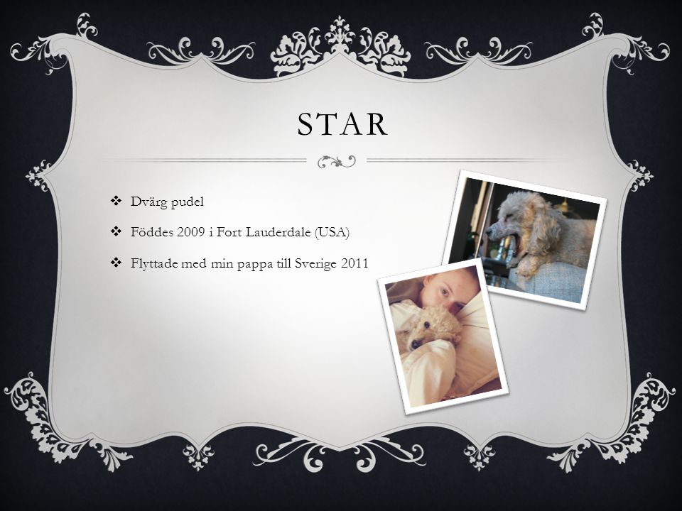 STAR  Dvärg pudel  Föddes 2009 i Fort Lauderdale (USA)  Flyttade med min pappa till Sverige 2011