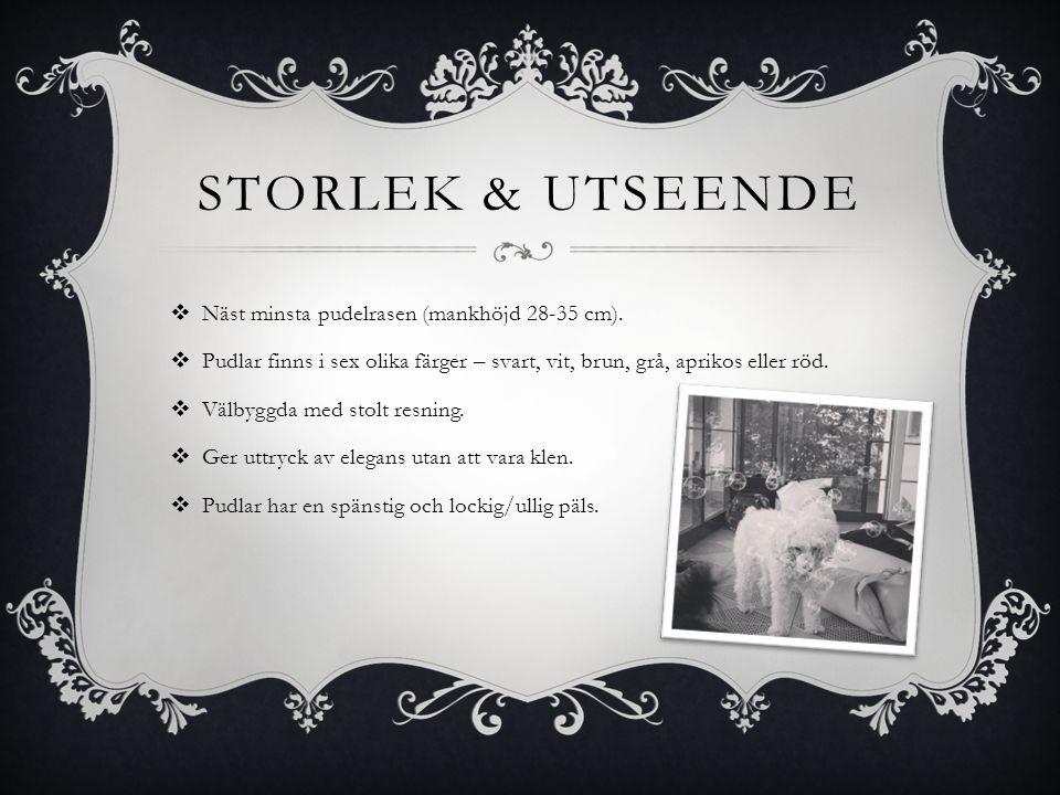 STORLEK & UTSEENDE  Näst minsta pudelrasen (mankhöjd 28-35 cm).