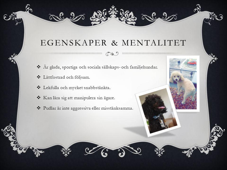 EGENSKAPER & MENTALITET  Är glada, sportiga och sociala sällskaps- och familjehundar.