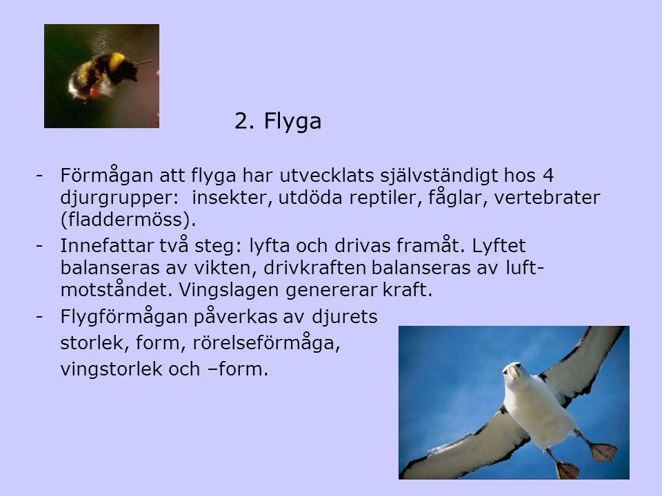 2. Flyga -Förmågan att flyga har utvecklats självständigt hos 4 djurgrupper: insekter, utdöda reptiler, fåglar, vertebrater (fladdermöss). -Innefattar