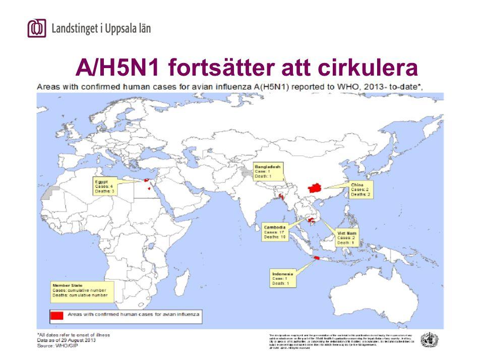 Smittskyddsenheten A/H5N1 fortsätter att cirkulera