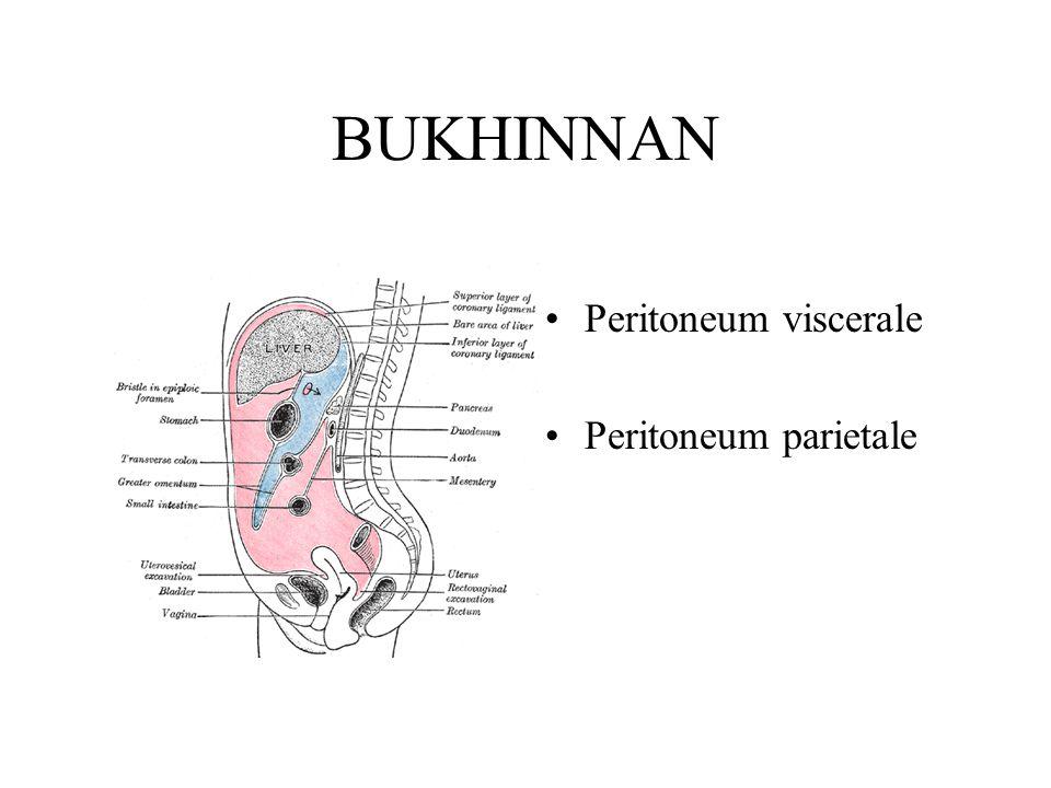 BUKHINNAN Peritoneum viscerale Peritoneum parietale
