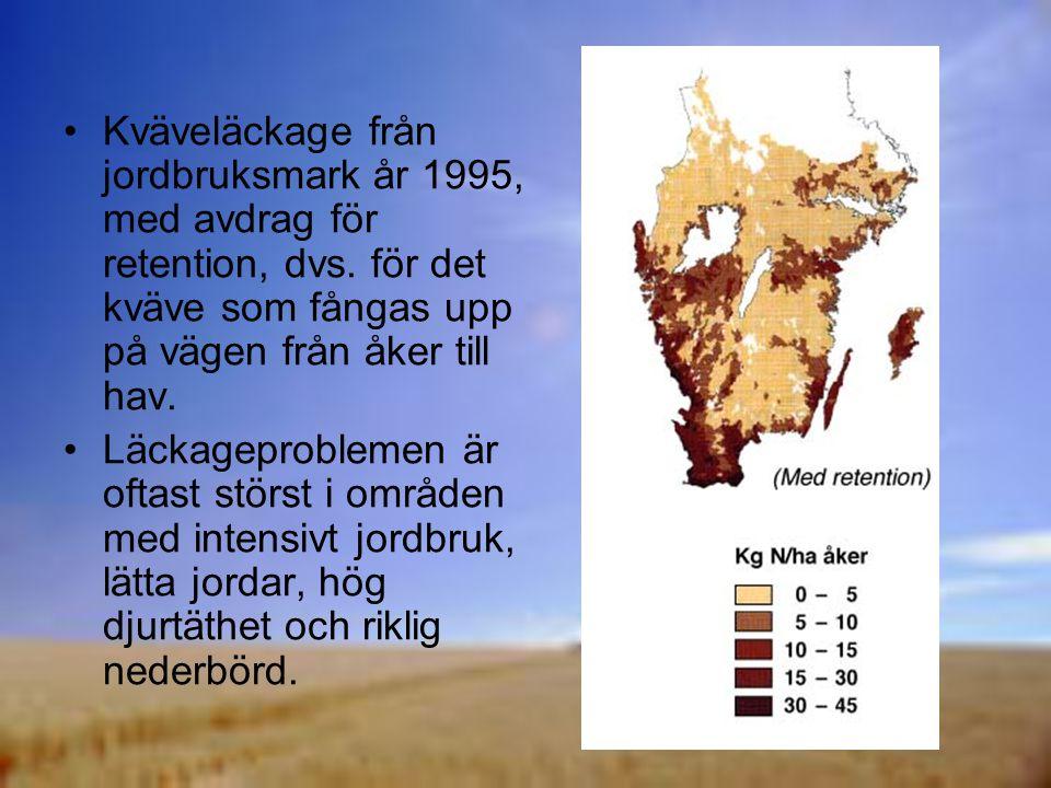 Kväveläckage från jordbruksmark år 1995, med avdrag för retention, dvs.