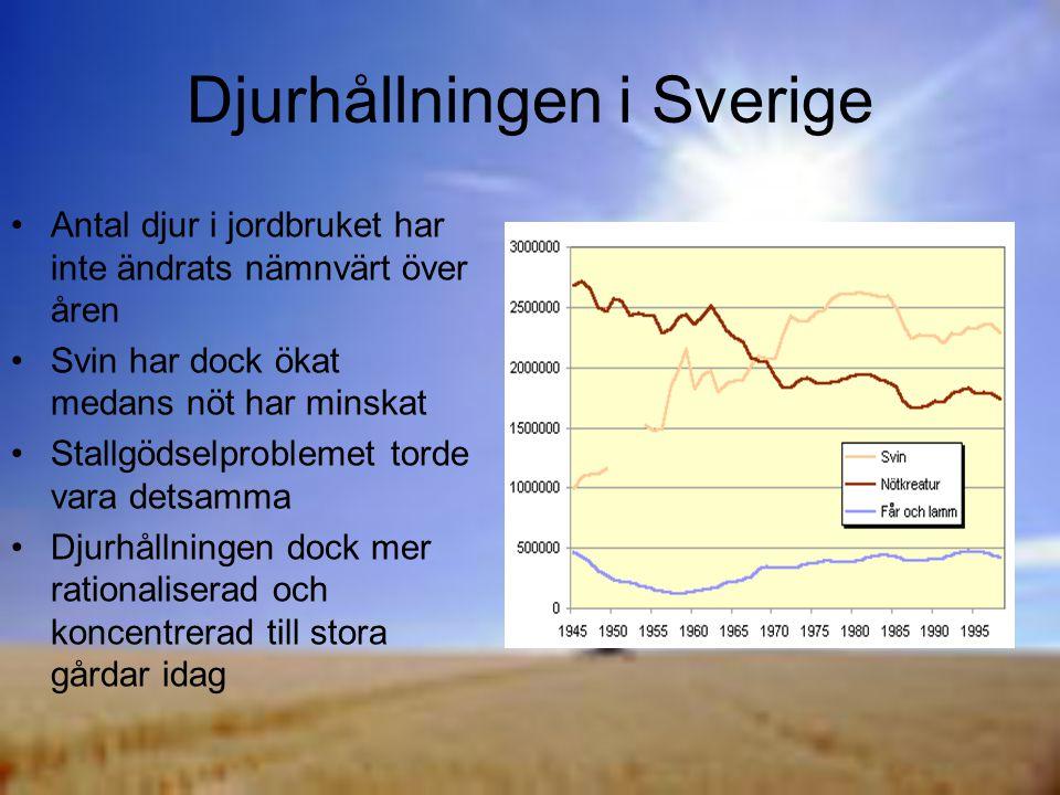 Djurhållningen i Sverige Antal djur i jordbruket har inte ändrats nämnvärt över åren Svin har dock ökat medans nöt har minskat Stallgödselproblemet torde vara detsamma Djurhållningen dock mer rationaliserad och koncentrerad till stora gårdar idag