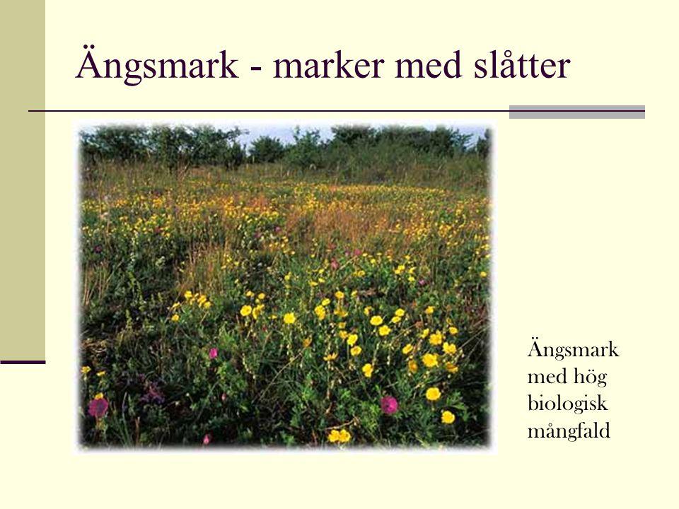Ängsmark - marker med slåtter Ängsmark med hög biologisk mångfald