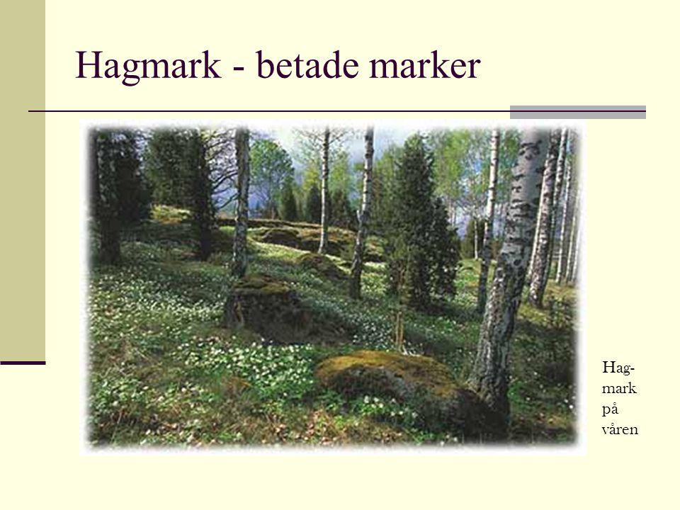 Hagmark - betade marker Hag- mark på våren