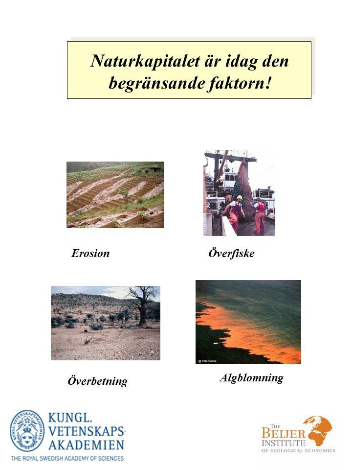 Erosion Överbetning Algblomning Naturkapitalet är idag den begränsande faktorn! Överfiske