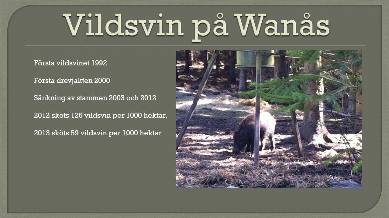 Första vildsvinet 1992 Första drevjakten 2000 Sänkning av stammen 2003 och 2012 2012 sköts 126 vildsvin per 1000 hektar.