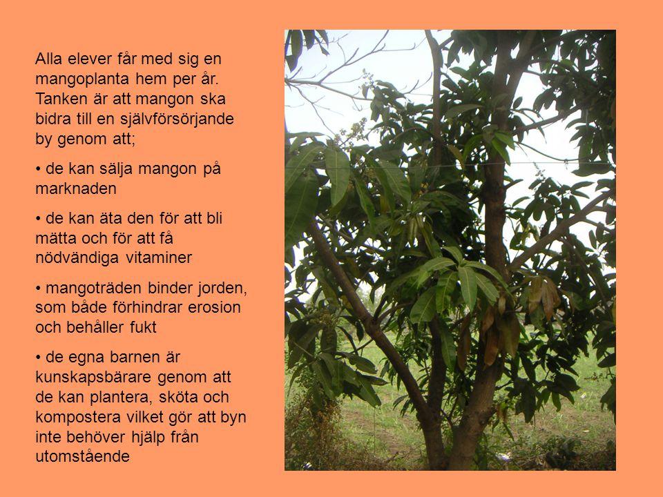 Alla elever får med sig en mangoplanta hem per år.