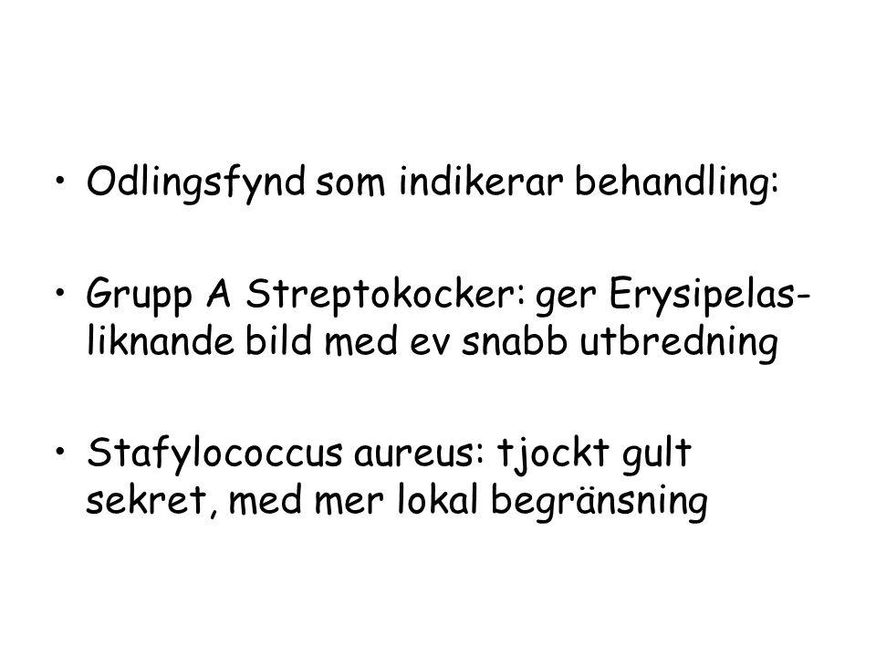 Odlingsfynd som indikerar behandling: Grupp A Streptokocker: ger Erysipelas- liknande bild med ev snabb utbredning Stafylococcus aureus: tjockt gult s
