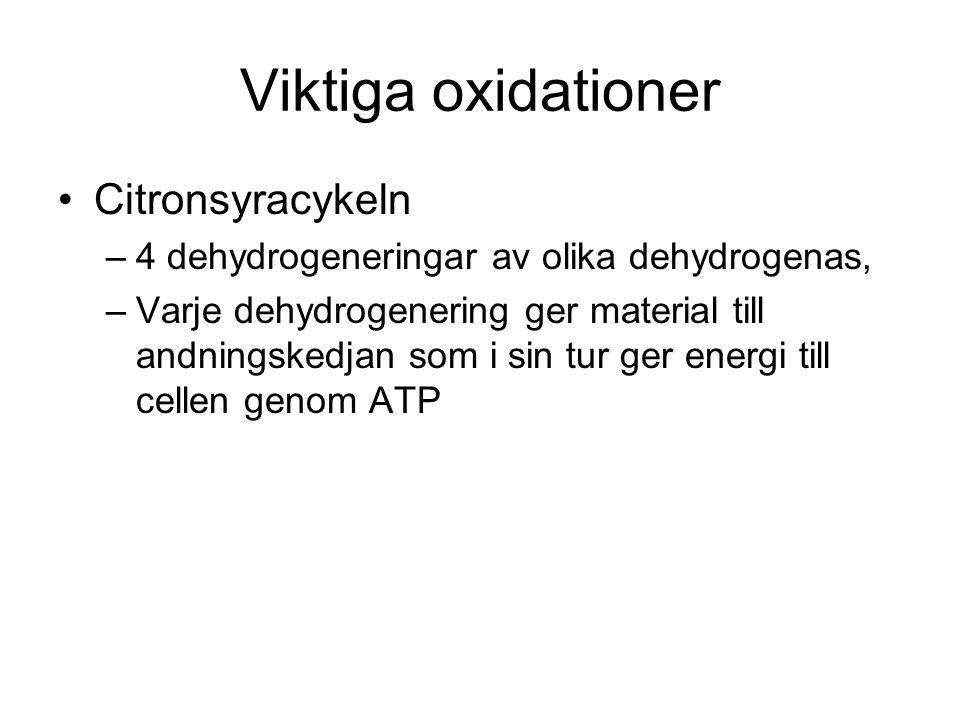 Viktiga oxidationer Citronsyracykeln –4 dehydrogeneringar av olika dehydrogenas, –Varje dehydrogenering ger material till andningskedjan som i sin tur