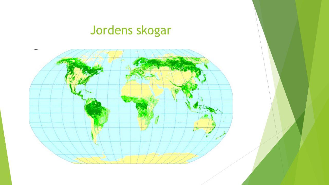 Jordens skogar