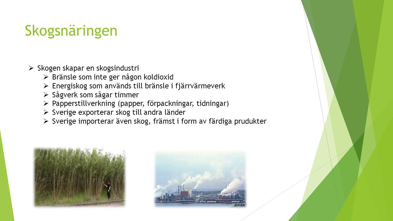 Skogsnäringen  Skogen skapar en skogsindustri  Bränsle som inte ger någon koldioxid  Energiskog som används till bränsle i fjärrvärmeverk  Sågverk