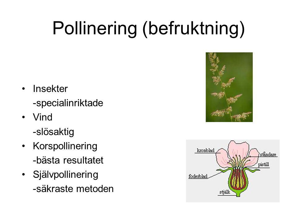 Pollinering (befruktning) Insekter -specialinriktade Vind -slösaktig Korspollinering -bästa resultatet Självpollinering -säkraste metoden