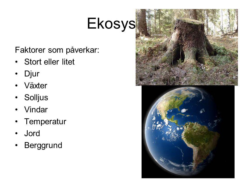 Ekosystem Faktorer som påverkar: Stort eller litet Djur Växter Solljus Vindar Temperatur Jord Berggrund