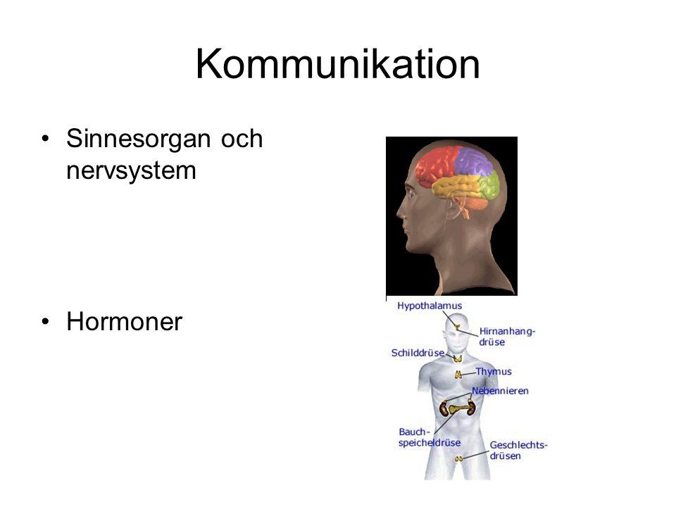 Kommunikation Sinnesorgan och nervsystem Hormoner